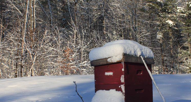 arnia invernale