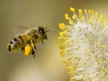 api e diagnosi delle malattie