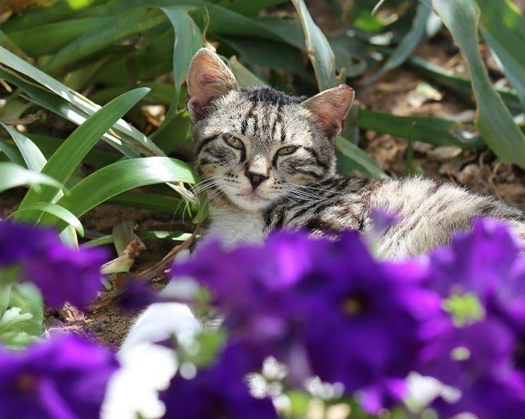 gatto su fiori