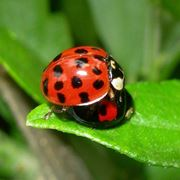 Coccinelle...in pausa
