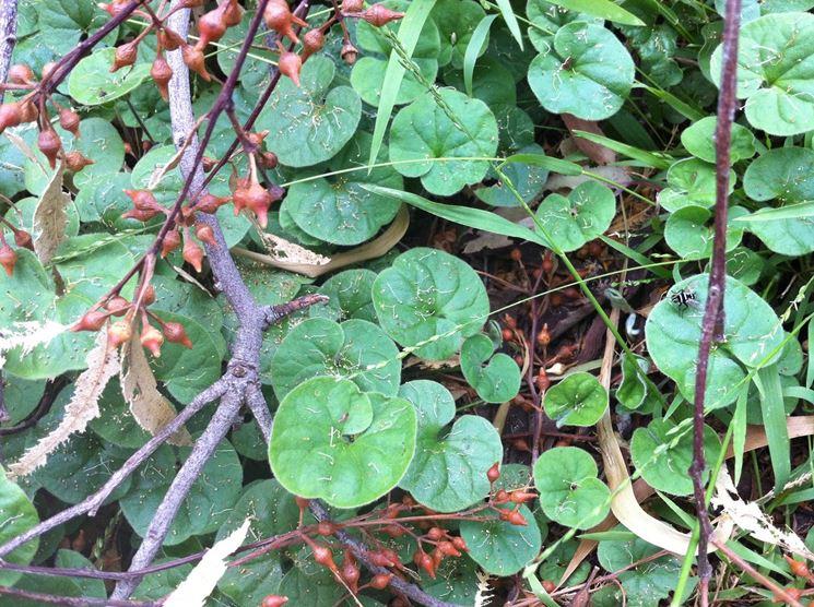 Crescita pianta prato