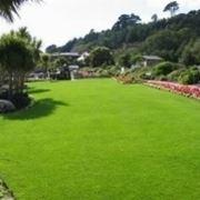 semi erba prato