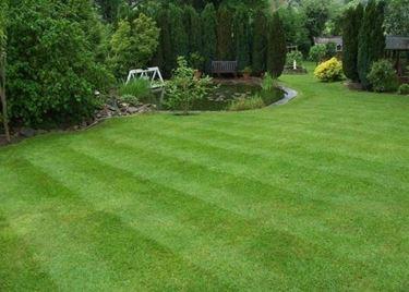 Erba per giardino