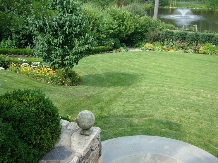 Erba per giardino<p />