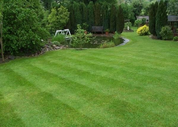 Erba per giardino prato - Quando seminare erba giardino ...