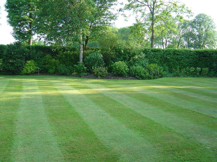 Erba prato prato erba e prato caratteristiche - Quando seminare erba giardino ...