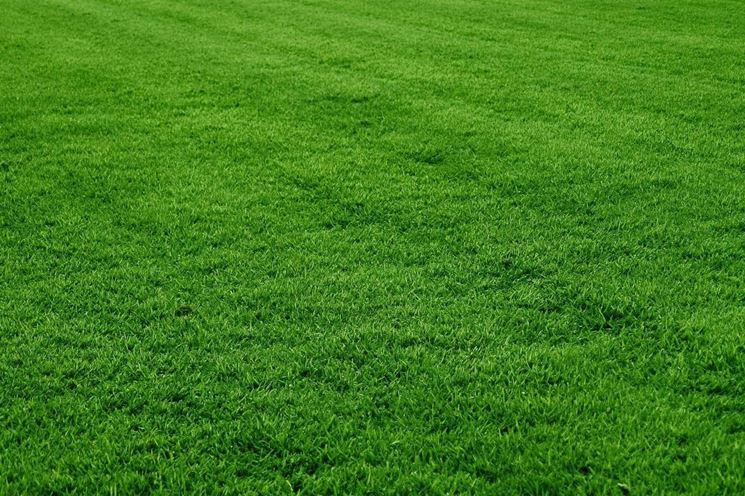 Manto erboso prato - Quando seminare erba giardino ...
