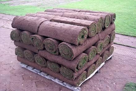 Prato a rotoli preparazione terreno confortevole for Tappeto erboso a rotoli