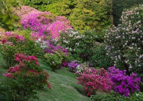 Castel sismondo e piazza malatesta fioriscono con giardini d autore