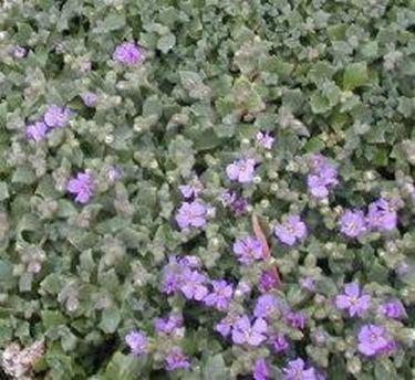 Le piante erbacee perenni - Speciali