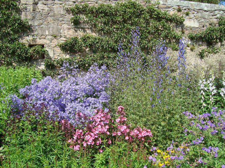 Le piante erbacee perenni speciali for Piantine fiorite perenni