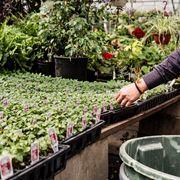 Dettaglio vendita piante