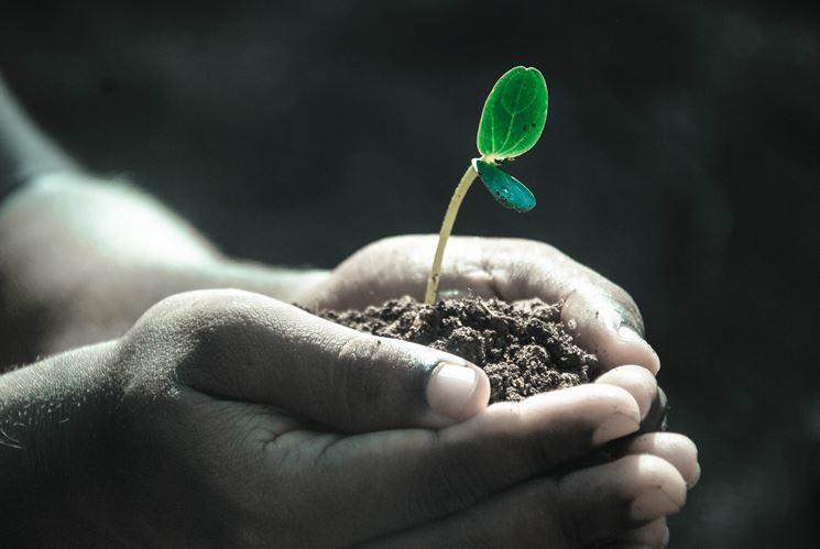 argilla espansa giardinaggio