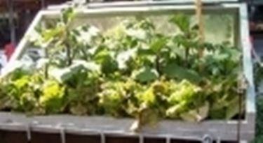 Coprire le piante