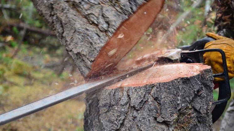 tagliare legna
