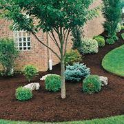 Un esempio di pacciamatura in giardino