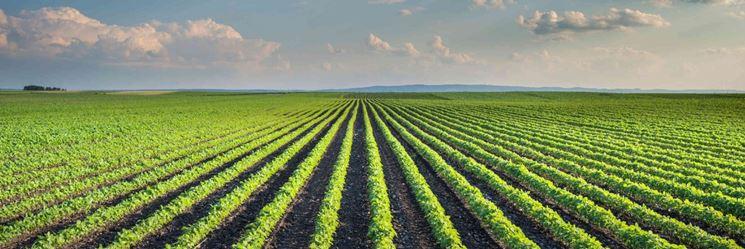 Campo agricolo fertilizzato