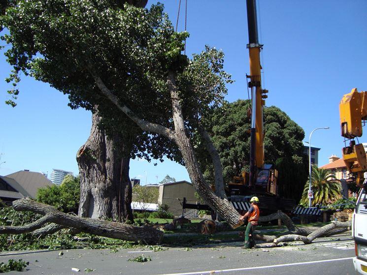 Potatura degli alberi in città