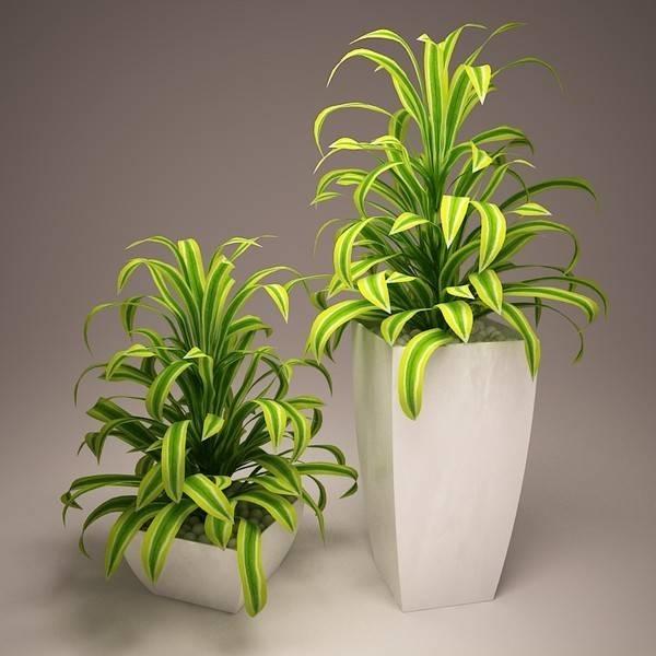 Produzione piante tecniche di giardinaggio for Vasi per piante da interno moderni