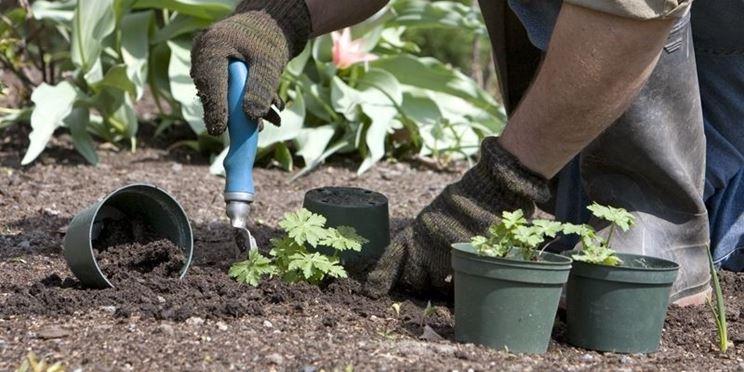 Piante fertilizzate minerale vermiculite
