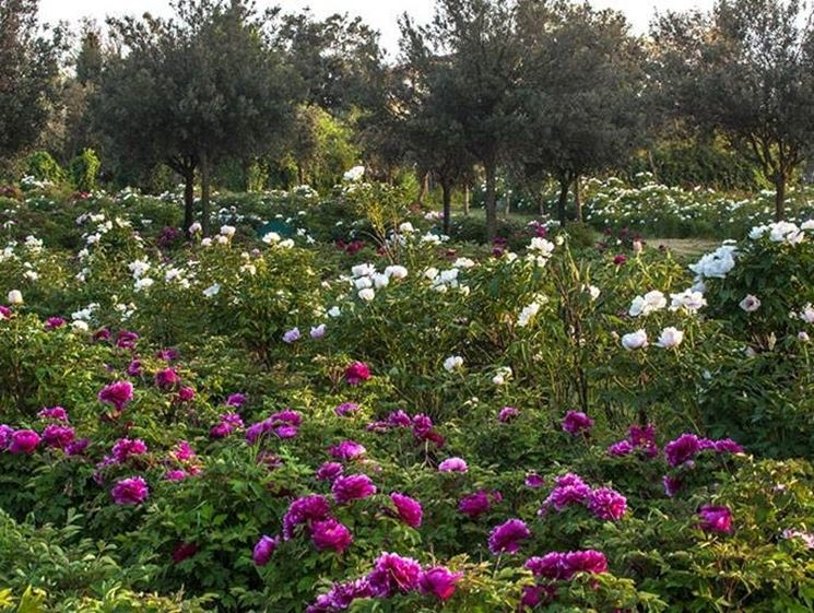 Il Centro botanico Moutan
