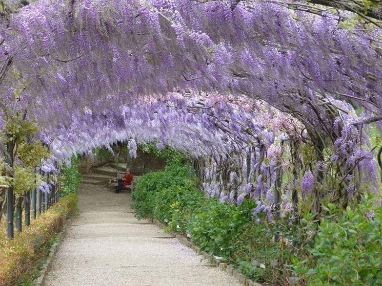 Dettaglio di un vialetto coperto del giardino