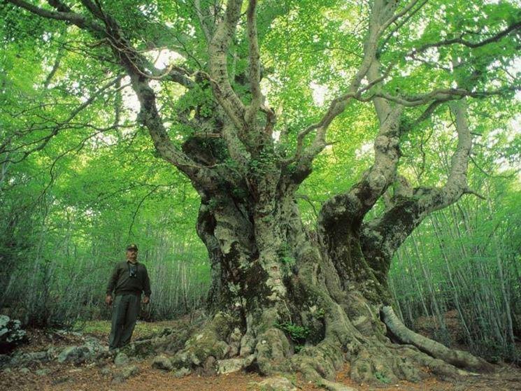 Albero secolare all'interno del parco nazionale