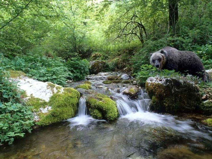 Esemplare di orso