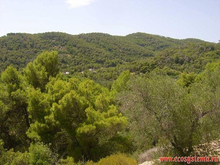 Paesaggio del Parco Gargano