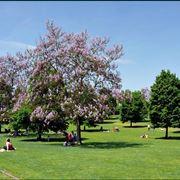 Parco giardino Sigurt�
