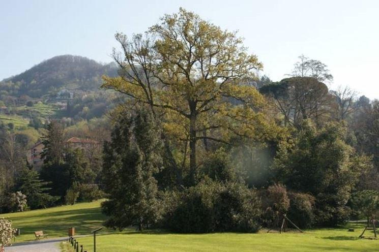 Un particolare del parco di Villa Serra