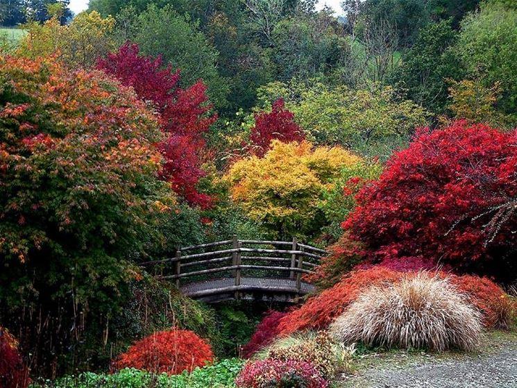 creare il giardino