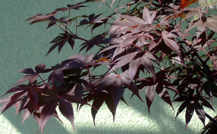 Albero arbusto inverno