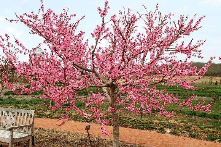 Alberi da fiore alberi alberi con fioritura - Albero sempreverde da giardino ...