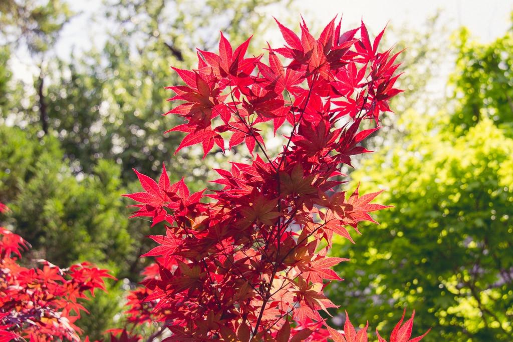 Alberi da giardino alberi - Alberi da piantare in giardino ...