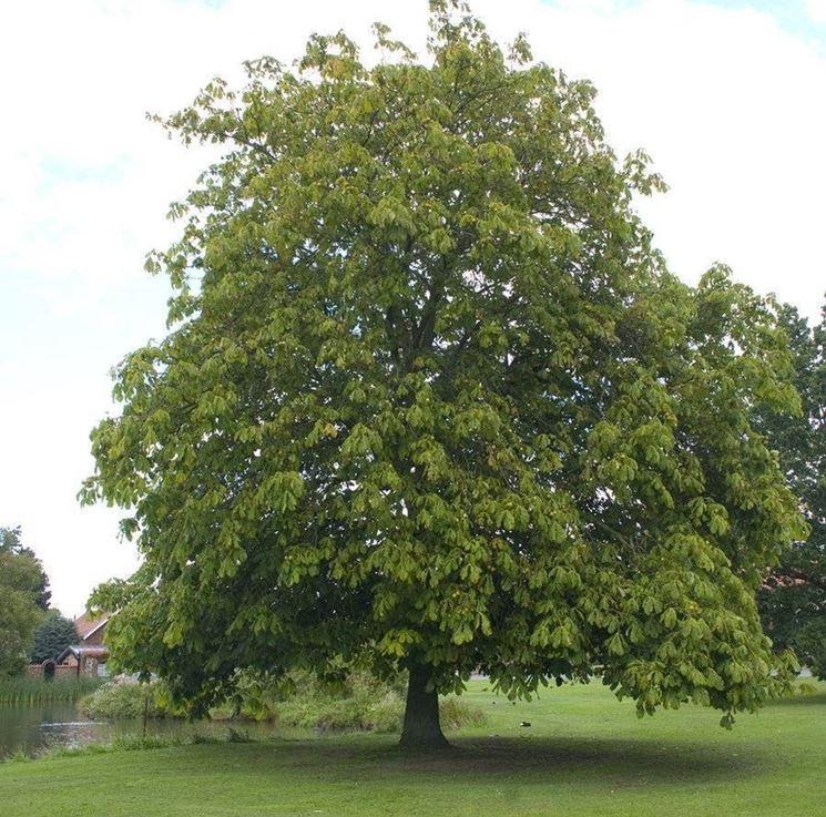 Alberi per giardino alberi - Alberi ornamentali per giardino ...