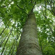 nomi di alberi