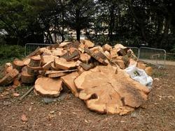 legno cedro