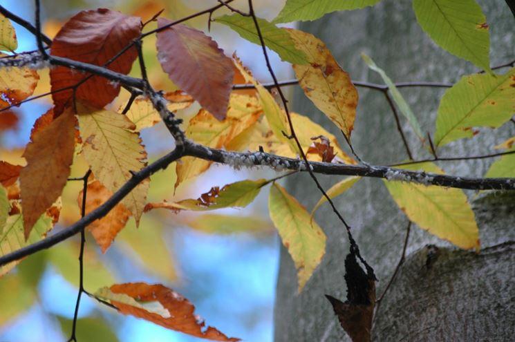Parassiti albero