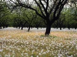 Gli alberi da giardino alberi - Alberi da giardino piccoli ...