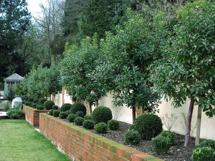 Gli alberi da giardino alberi alberi da giardino - Alberi sempreverdi da giardino ...