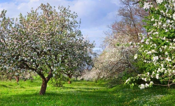 Gli alberi da giardino alberi alberi da giardino - Alberi particolari da giardino ...