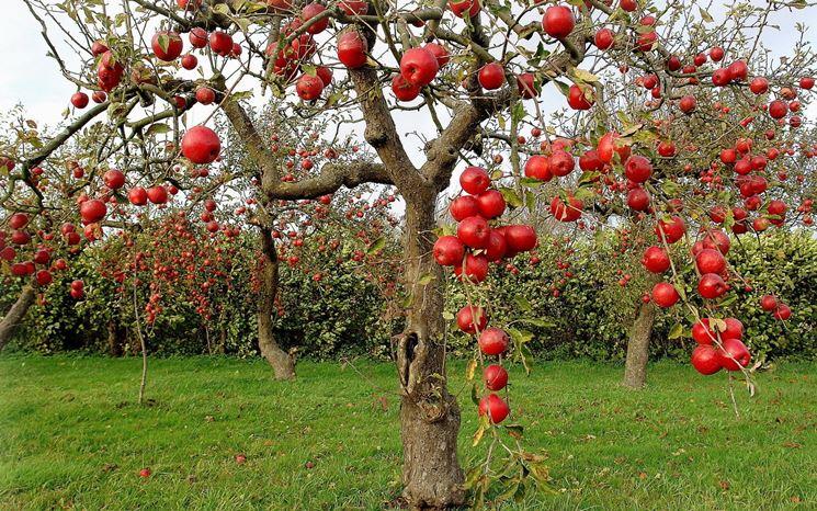 Gli alberi da giardino - Alberi - Alberi da giardino