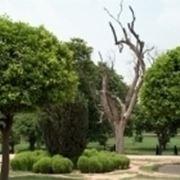 Gli alberi da giardino alberi alberi da giardino - Prezzi alberi da giardino ...