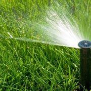 Irrigazione olmo