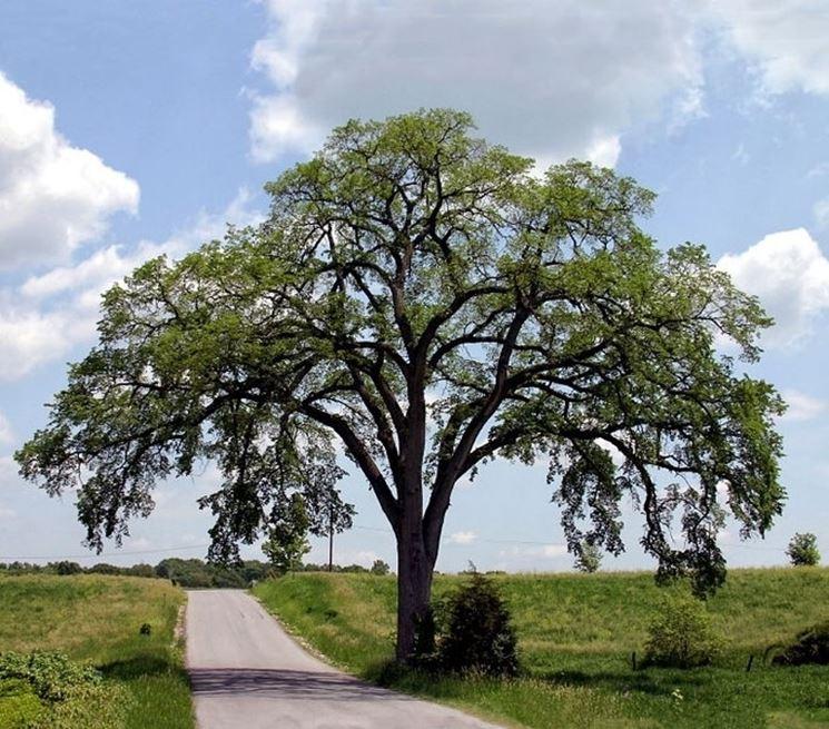 Tronco albero