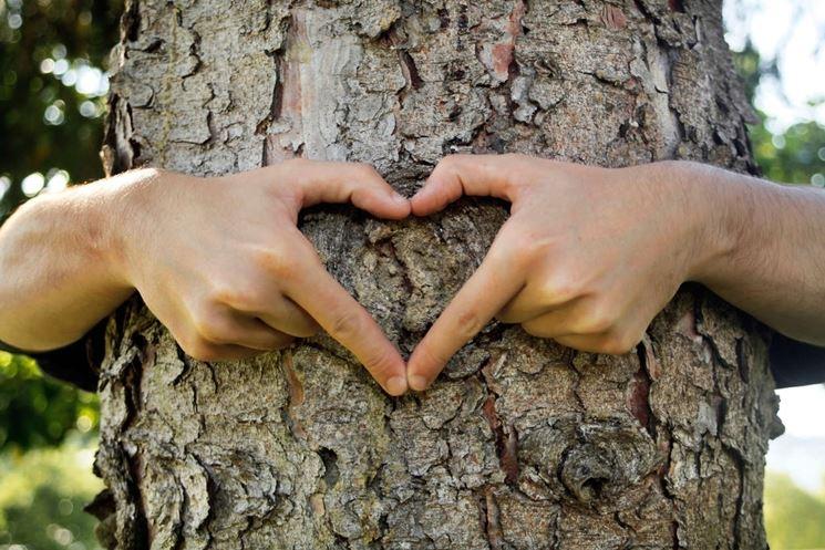 cura del tronco