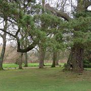 Piante colonnari arbusti di grandi dimensioni for Piante colonnari