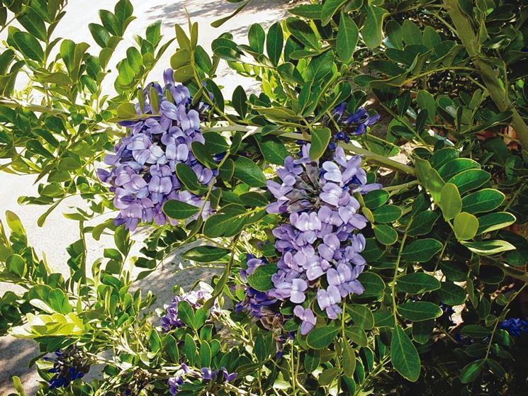 sofora con fiori viola