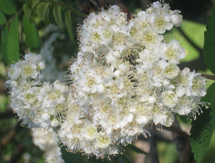 Fiori piante bacche